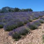 Provence - Francie 2013