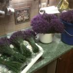 Vázání kytic ihned po sklizni